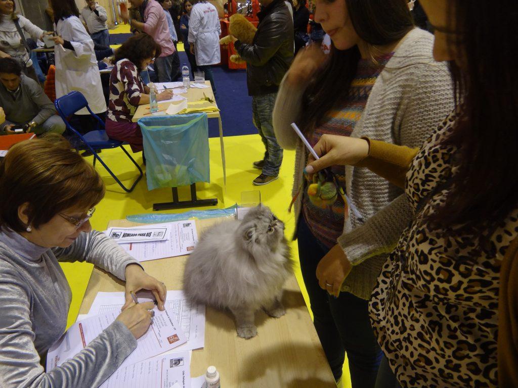 Exposição Internacional de Lisboa 2013 - Pet Festival